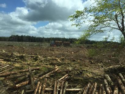 Large Clearfell Project in Devon with Weeks Forestry