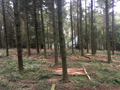 Forest thinning with Weeks Forestry