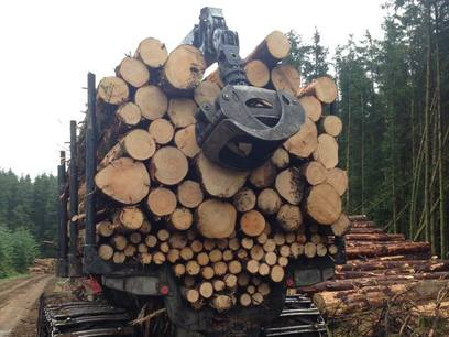 Thinning services with Weeks Forestry