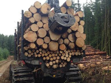 Forestry services in North Devon