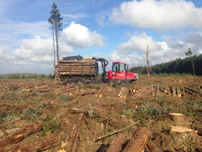 Clearfell services provided by Weeks Forestry