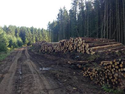 Weeks Forestry timber stacks